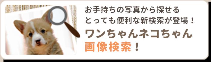 ワンちゃんネコちゃん画像検索!