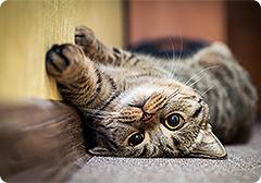 ネコちゃん図鑑