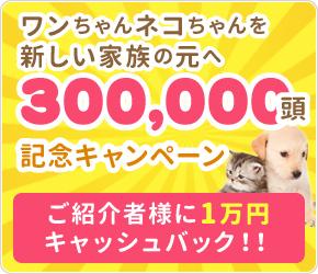 30万頭記念キャンペーン