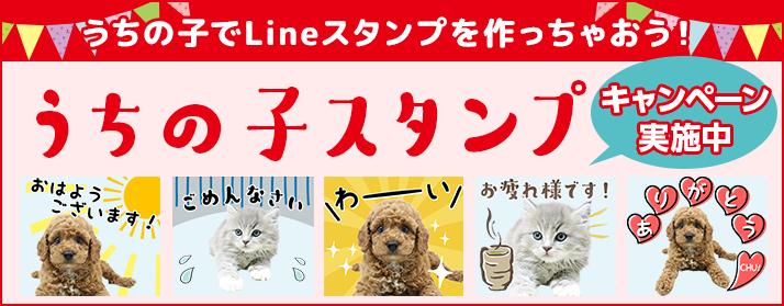 「うちの子スタンプ」愛犬・愛猫がLINEスタンプに!